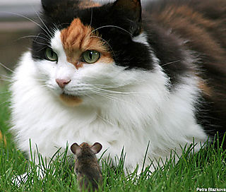 Cat and mouse 2