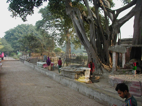 Remains of the Panchavati planted by Sri Ramakrishna in which he performed intense sadhana