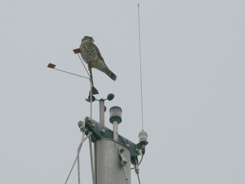 Bird on mast