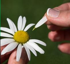 Plucking petals