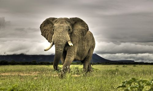 Wild-elephant-hd-wallpaper